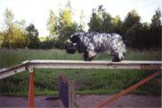 koira4